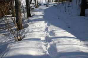 Trugespor i snøen!